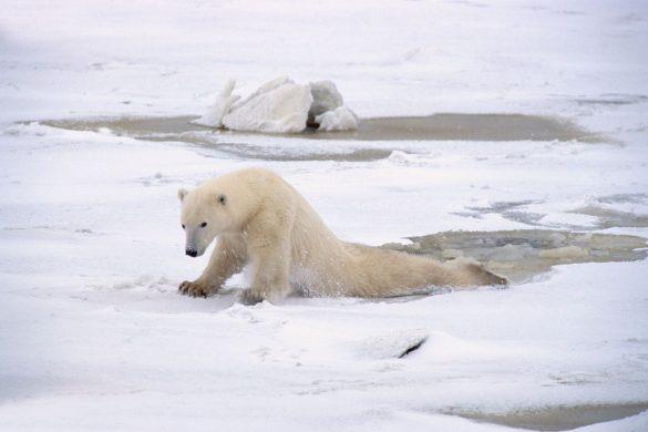 polar main