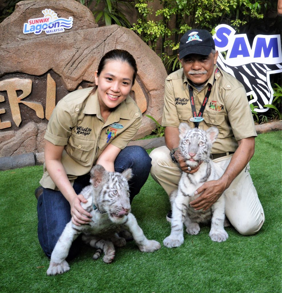 Dr. Eve Foong Yee Wei, Wildlife Veterinarian, Sunway Lagoon and Azman Ghazali, Manager of Wildlife, Sunway Lagoon with the adorable 4-month old white tiger cubs, Sam and Elsa