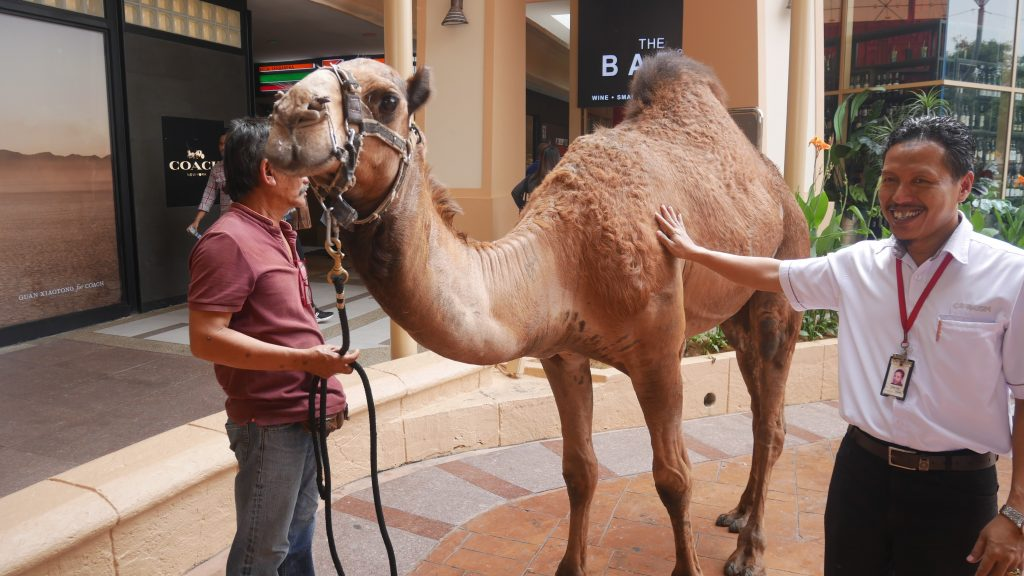 Isn't Barny the Camel a cutie?