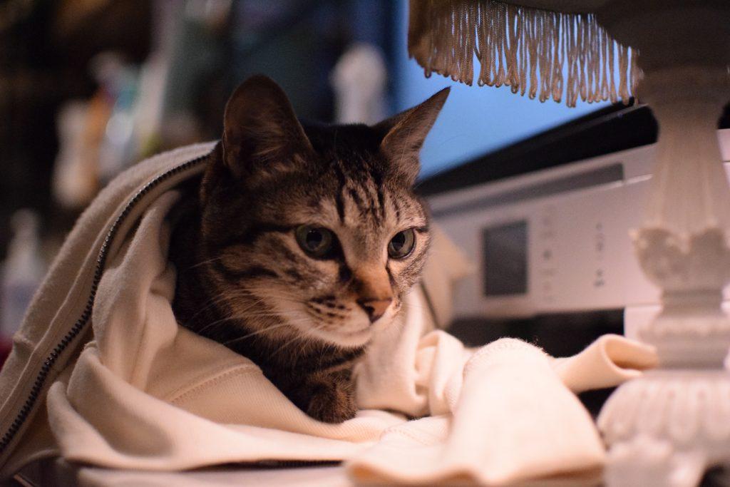 CAT! Tokyo Cat Tour for Cat Lover!_01