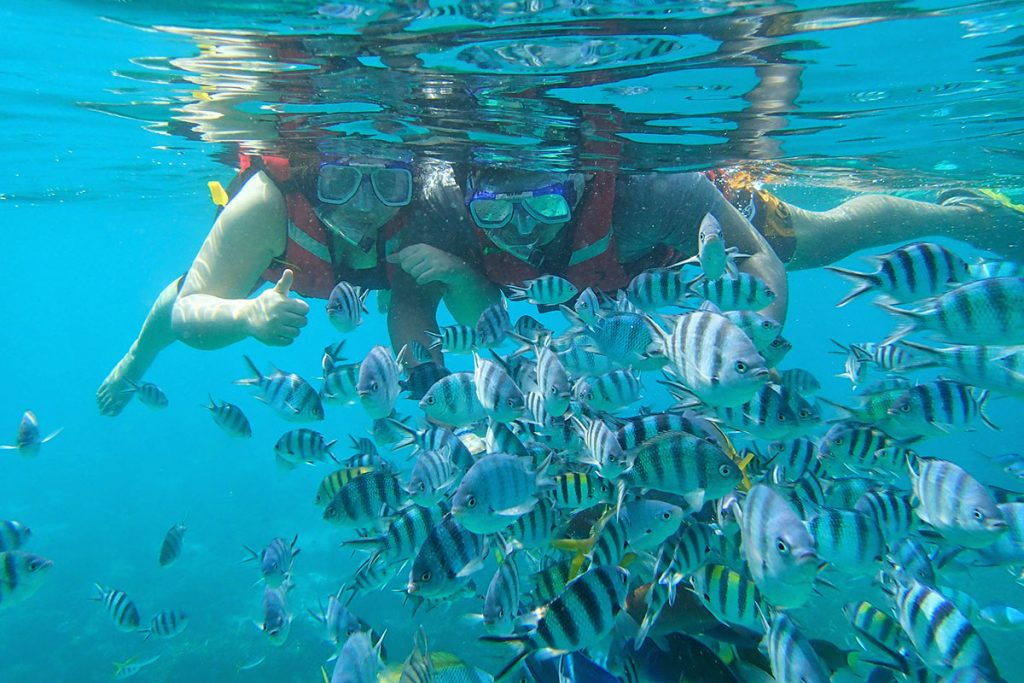 Explore the aquatic species and stunning coral reefs when you're in Tioman. (image via tioman.org)