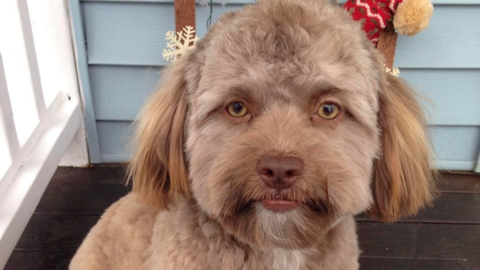 Dog Resemblance A Human Face and Internet Goes Wild