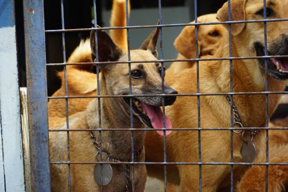 PAWS animal shelter dogs